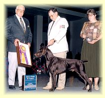 Marco receives Best Of Breed.